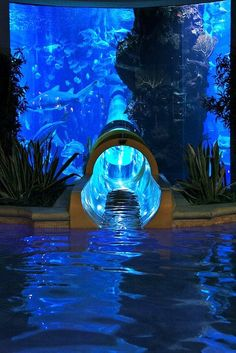 Wow! How's this for your next home aquarium?