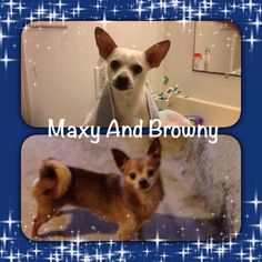 Maxy & His Brother Browny