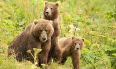 """Keep Public Lands Public -- And the Wildlife They Protect! - """"Last week, the U.S. Fish and Wildlife Service banned the hunting of predators in Alaska's 16 wildlife refuges unless needed """"in response to a conservation concern."""""""