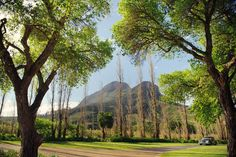 MolenVliet Oosthuizen Family Vineyards offers our clientele various options to host their perfect Wedding or Event.  Rated one of the Top Wedding Destination Venues of the World, the overall experience is one not to be missed. Wedding Ceremonies can be hosted in our beautifully landscaped gardens or even in the middle of the Vineyards, whilst The Wedding Events, Wedding Ceremony, Event Venues, Perfect Wedding, Vineyard, Destination Wedding, World, Middle, Gardens