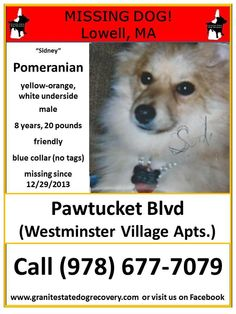 "Missing in Lowell, MA – ""Sidney"" is a male Pomeranian, yellow-orange with white underside, 8 years old, 20 pounds, friendly. Wearing a blue collar, no tags. Missing since 12/29/2013 from Pawtucket Blvd, Westminster Village apartments. Please share his flier. Have you noticed someone with a new dog like Sidney in the past couple of weeks? Call (978) 677-7079 or (978) 726-3432 with any information"