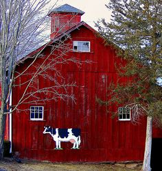 cow on the barn goes moo, moo, moo by rich66 ~~, via Flickr