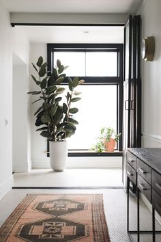 11 Best Tall Indoor Plants Images Indoor House Plants Indoor