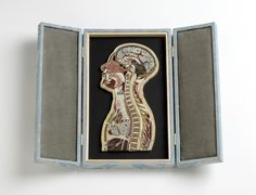 Anatomical paper art, or quilling. Artist Lisa Nilsson says: 'I find quilling exquisitely satisfying for rendering the densely squished and lovely internal landscape of the human body in cross section. Anatomy Art, Human Anatomy, Gross Anatomy, Body Anatomy, Lisa, 9 Mm, Marcel Duchamp, Quilled Paper Art, Cross Section