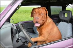 How to Stop Your Dog from Barking In the Car?