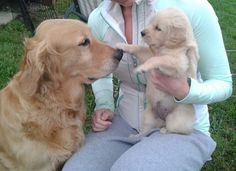 When this puppy treated her elder with respect by offering a polite boop. | 22 Boops That Changed The World In 2013