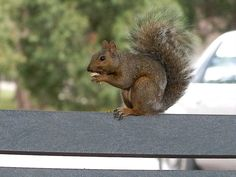 squirrel, park, animal, wildlife, outdoors, nature