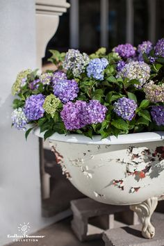 Why restrict yourself to a standard deco pot? Be creative and have fun with your outdoor plantings! This old claw foot tub is full of beautiful Endless Summer® BloomStruck™ Hydrangea! #EndlessSummer #hydrangea #BloomStruck #LifeInFullBloom #garden #landscape #DIY #landscaping