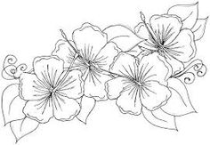 Image result for hibiscus drawings