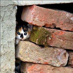 *cute little calico kitten