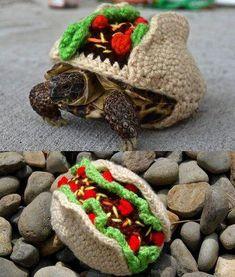 ♥ Pet Turtle ♥ Crochet taco costume for your pet turtle. Tortoise As Pets, Cute Tortoise, Tortoise Food, Sulcata Tortoise, Tortoise Care, Tortoise Turtle, Pet Turtle, Turtle Love, Cute Turtles