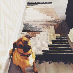 #VSCOcam #puggle #puppy #winstonchurchill #westelm