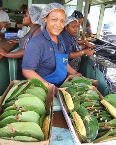 Alcapurrias envueltas en hojas de uvas playeras, hechas por manos puertorriqueñas en uno de los Kioskos de Loíza. Nuestra gente, orgullo boricua!! Somos Puerto Rico