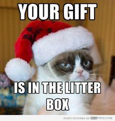 Lol guts from grumpy cat