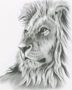 Charcoal Drawing 8x10 ORIGINAL Lion Art Lion