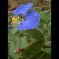 Nature in bloom 7 .  .  .  #instanature #instapic #instalike #instaflower #instablue #instagreen #instaphoto #instafollowback #instacolors #instalove #followback #loveforpic #visualarts #instamoment #instaclick