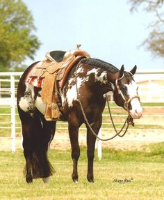 overo paint horse - Google Search