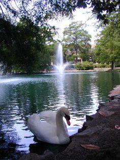 Theta Pond at Oklahoma State University, Stillwater, Oklahoma  www.DebbieKrug.com