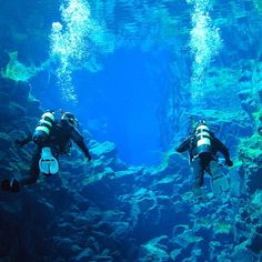The #silfra rift in #iceland is one of the #best #dive sites on the planet! Located between the American and Eurasian continents, Silfra boasts the clearest waters in the world....and we can take you there! #fridayfacts #scuba #scubadiving #scubadive #reykjavik #underwater #underwaterphotography #travel #adventure #adventureisoutthere #holiday #vacation #seeittobelieveit