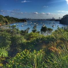 Sirius Cove is a great hidden beach and park, and it leads on to a trail that can take you from Taronga Zoo to Chowder Bay. — biancab4184d459c