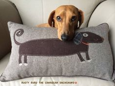 """Made especially for me!"" #dogs #pets #Dachshunds Facebook.com/sodoggonefunny"