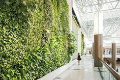 Vertikal garden, membuat taman vertikal di rumah, kantor, dll