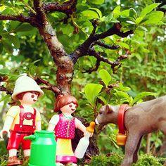 グッモーニーンヽ(´ー`)ノ Good morning! #playmobil #Calf #Cow #plant #Moss #Tree #Child #Woods #プレイモービル #プレモ #子供 #子牛 #苔 #木 #森 #盆コレ