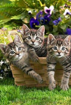 Three little beauties!