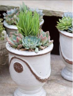 A tall spiky variety looks great  surrounded by rosette-shaped succulents.