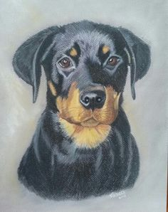 My puppy #drawing #derwent #coloursoft #softpencils
