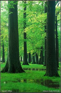 Green Forest - journey through woods