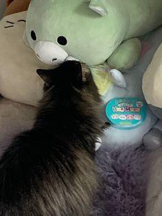 (;´༎ຶٹ༎ຶ`) Cow Colour, Color, Cats, Gatos, Colour, Cat, Kitty, Kitty Cats, Colors