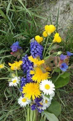 Il mazzolino campagnolo di Luisa... Plants, Planters, Plant, Planting