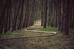 Леса, Змея, Искусство, Деревья, Пути