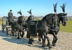 Image detail for -... Victorian Horse Drawn Hearse Carriages for funerals of distinction