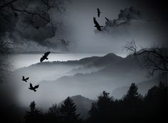 Dark Crows over the Forrest wallpaper from Dark wallpapers - Would love this for a bedroom wallpaper