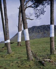 Tree Line, Zander Olsen, constructed photograph with white material, 2016
