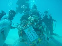 channel islands de californie | 水中結婚式:沖縄ダイビングブログ、ベントス日記