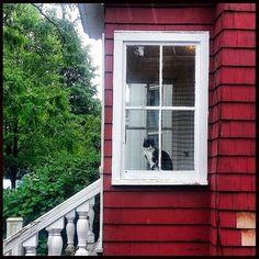gato & janela