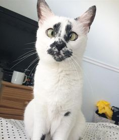 Meet Lily the cat! She was found abandoned at a construction site with her sister when they were only two days old.