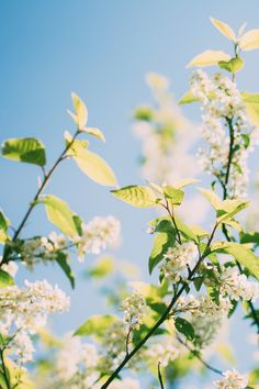 Free stock photo of nature, flowers, branches