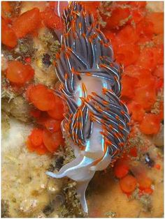 Nudibranchs: Beautiful Animals You Never Knew About | Scienceray