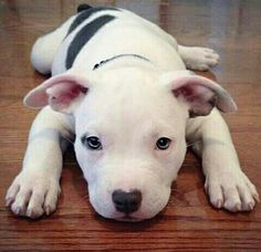 I just want to snuggle with this pup!