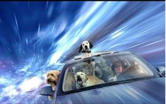 #Dogs That Look Like They Are Warping Through #Space http://ibeebz.com