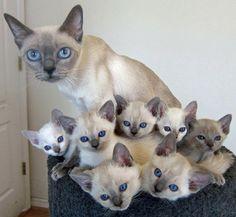 15 gatos posam com seus filhotes