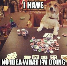 Don't even get me started on gambling! | 32 Dogs Who Are Completely In Over Their Heads