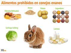 alimentos prohibidos conejo enano