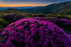 Photograph The secret garden 2 by Zsolt Kiss on 500px Rodnei Mountains,  Romania