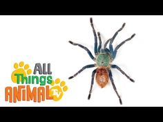 SPIDERS: Animals for children. Kids videos. Kindergarten | Preschool learning - YouTube