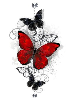 The composition of a bright red and black butterfly butterflies on a white backg. - The composition of a bright red and black butterfly butterflies on a white background Tattoo style - Rose And Butterfly Tattoo, Butterfly Drawing, Butterfly Tattoo Designs, Red Butterfly, Butterfly Painting, Lace Flower Tattoos, Butterfly Illustration, Butterfly Design, Tattoos 3d